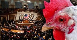 The Chicken-Ostrich Congress