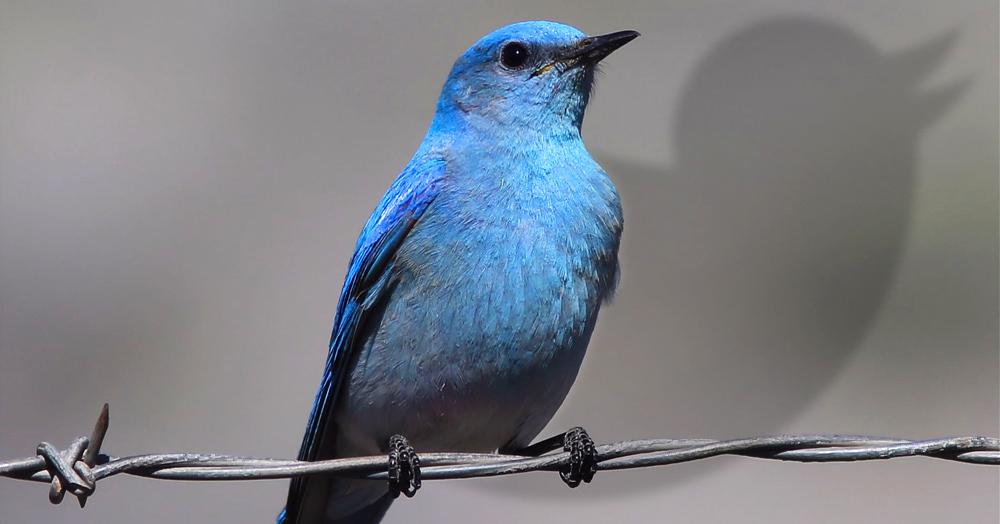 Twitter, freedom, social media, bluebird, government, internet, speech