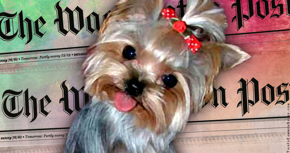 Washington Post, lap dog, lapdog, Department of Justice, FBI, crime, accountability